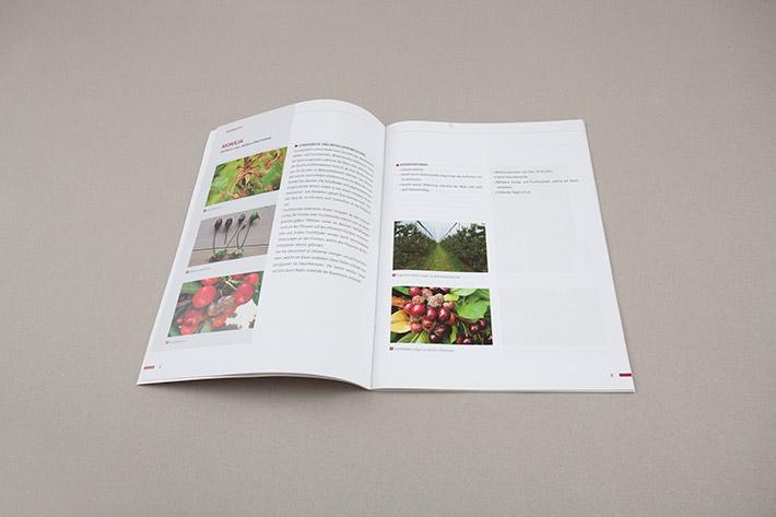 Innenseite Beratungsring Broschüre